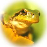 蛙new.jpg