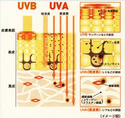 UVAとUVB.jpg